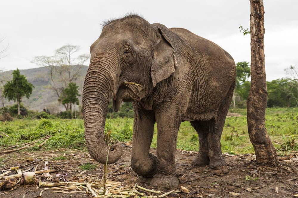 Znana ameriška pevka pomagala rešiti najbolj osamljenega slona na svetu