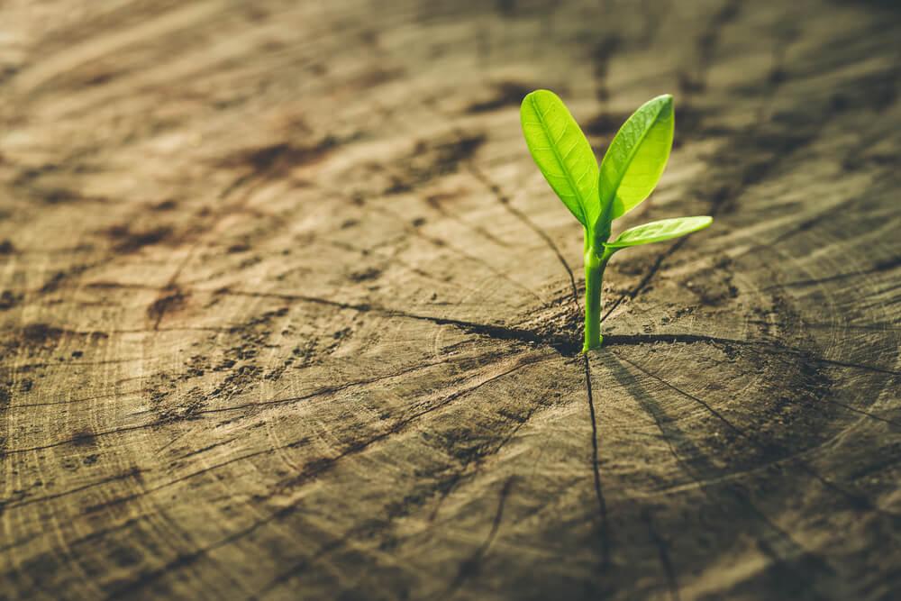 Trajnostne zaobljube največjih podjetij na svetu