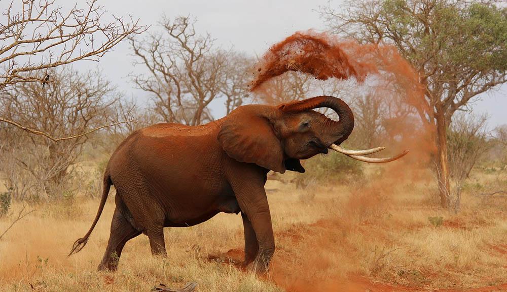 Čreda slonov obnavlja afriški narodni park