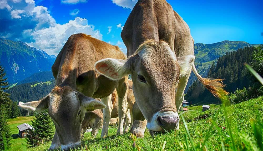 Kaj za leto 2021 pripravlja kmetijsko ministrstvo