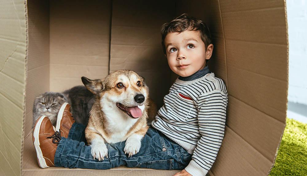Živali niso le naši spremljevalci, ampak tudi odlični terapevti