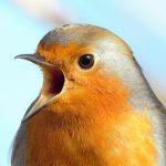 Slovenske pametne krmilnice za ptice žanjejo uspeh po svetu