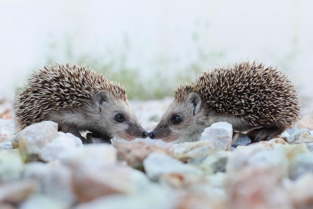 Ljubezen je v zraku: 15 čudovitih fotografij živalskih poljubčkov