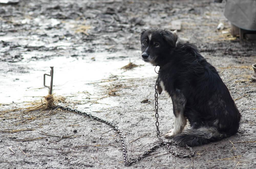 Bomo dočakali spremembe zakona za boljšo zaščito živali?