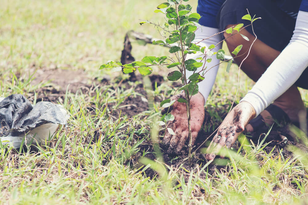 Bo obnova narave v EU postala pravno zavezujoča?