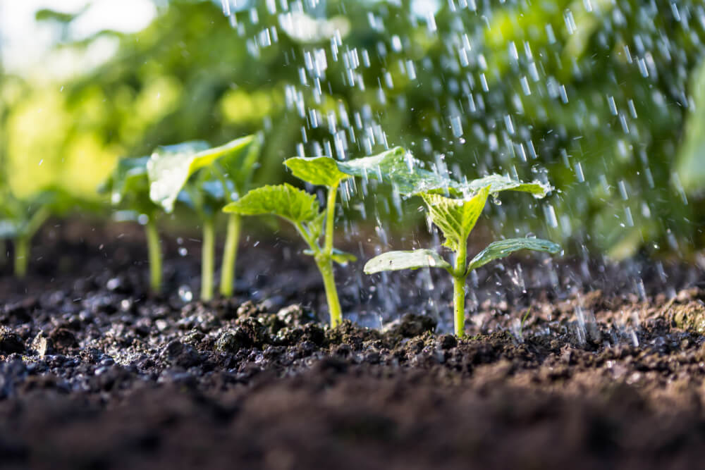 Vrt in okolica: Sadike z garancijo?