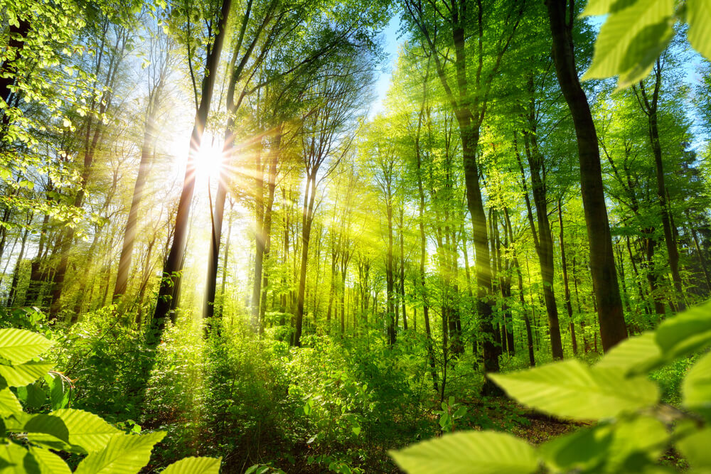 Bodo zadnji ostanki pragozdov v Sloveniji izgubili zaščito?
