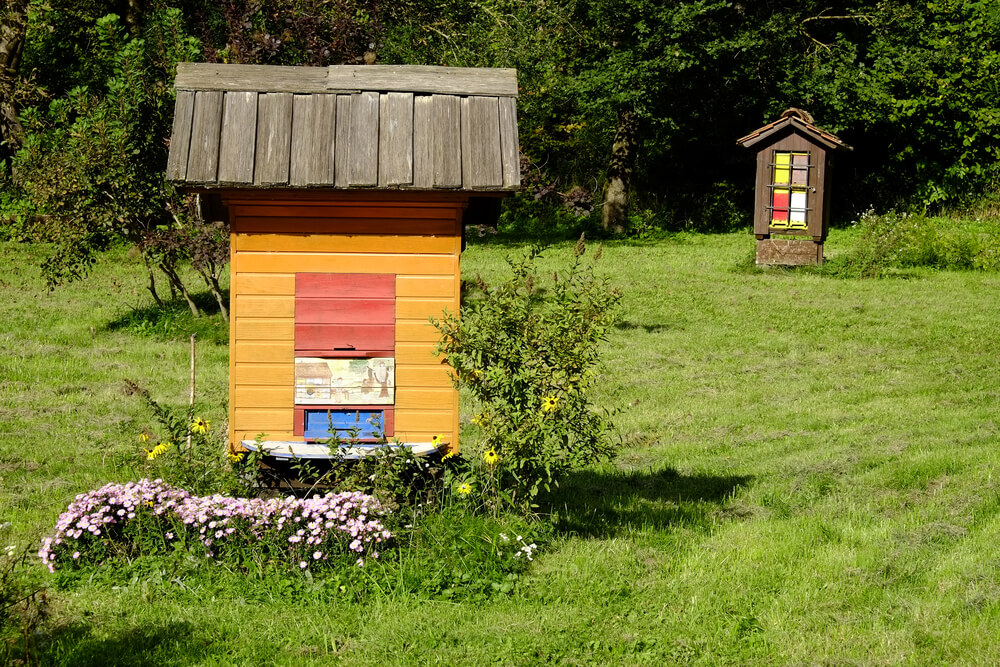 Vpis na UNESCO: Slovensko čebelarstvo