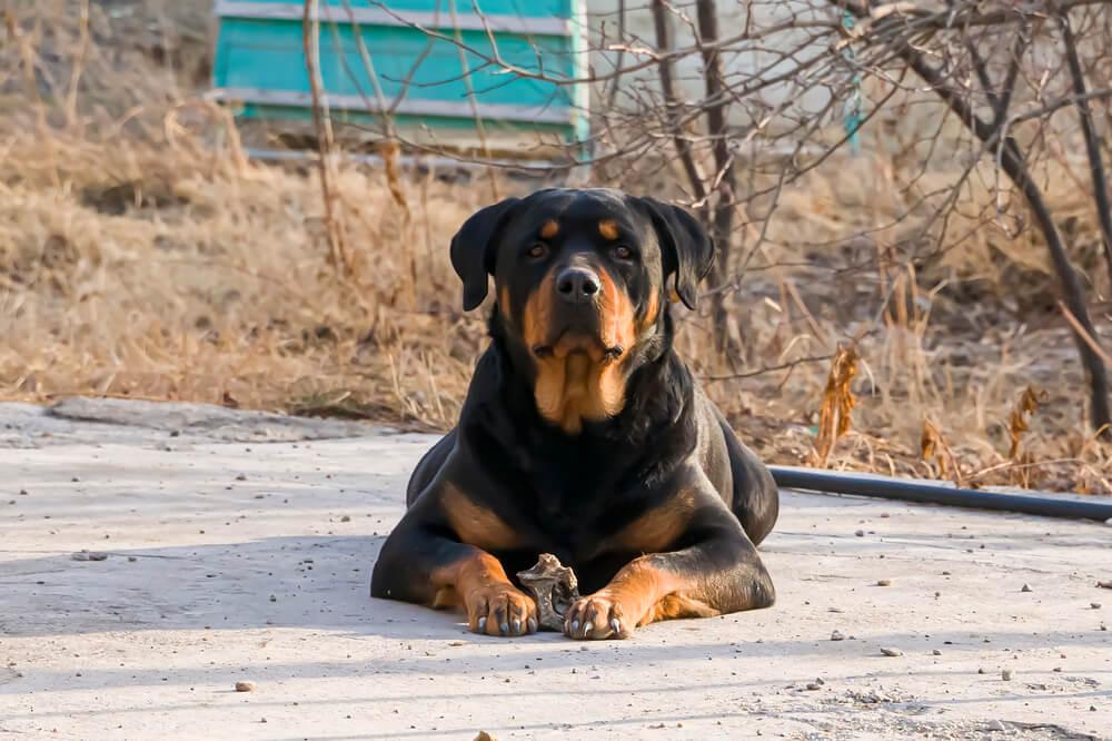 Tragični dogodek v Mengšu - kaj o usmrtitvi psov pravi zakonodaja?