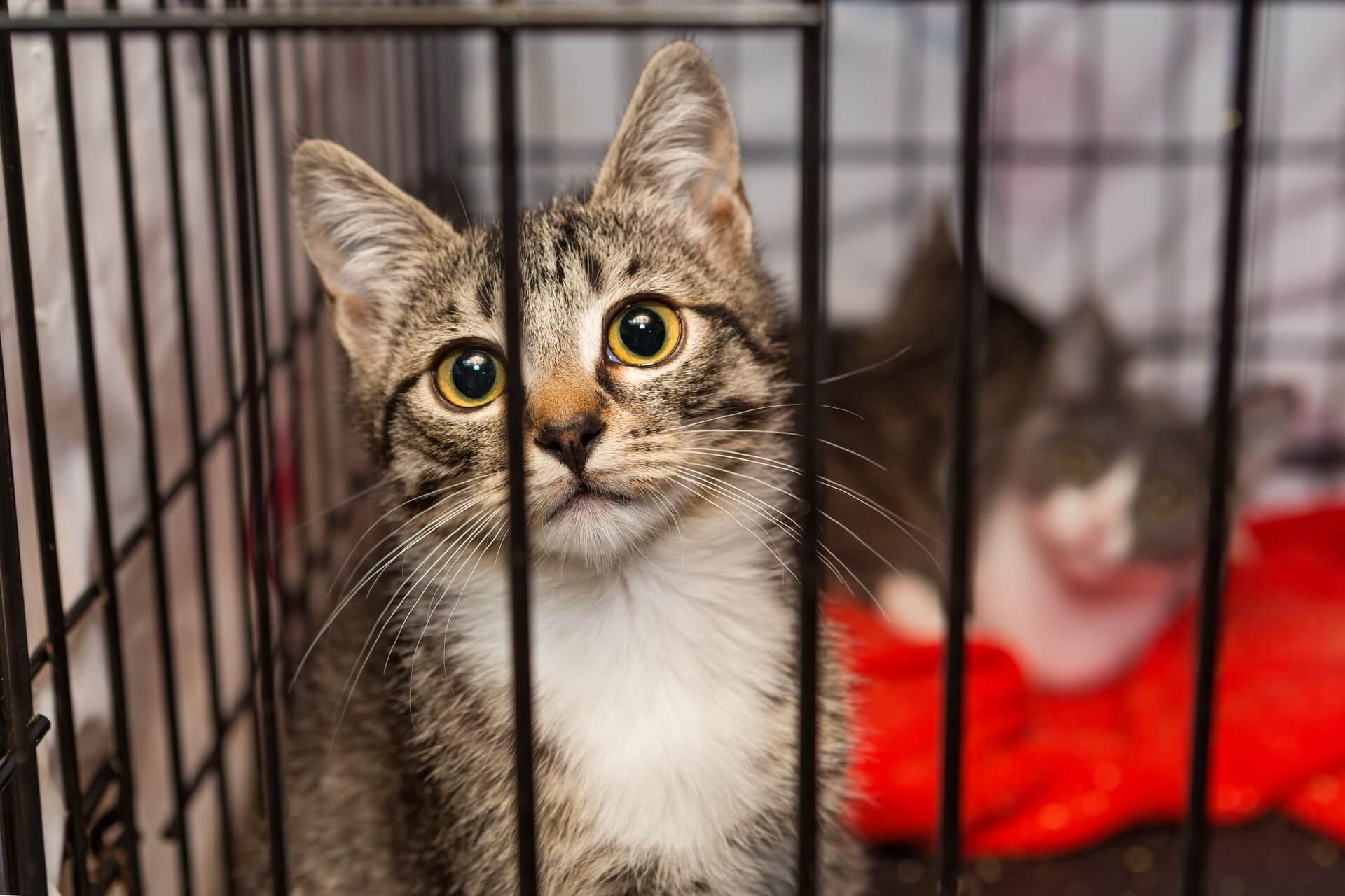 Bo res prišlo do sprememb v zavetiščih za zapuščene živali?