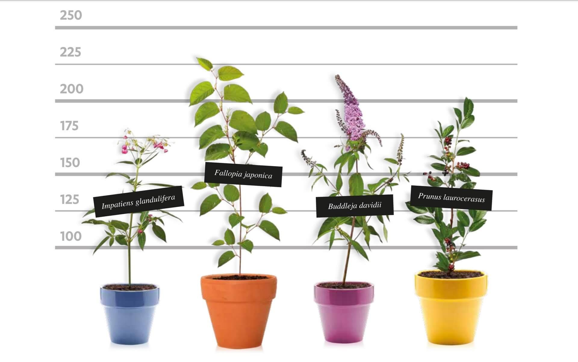 Obetaven projekt za koristno izrabo invazivnih tujerodnih rastlin
