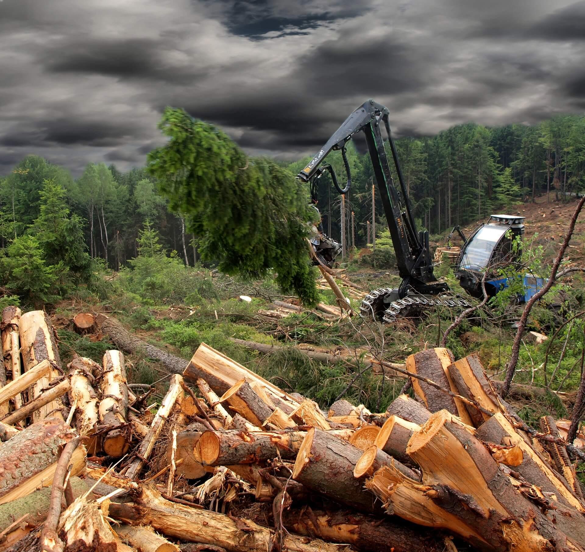 Razvoj gozdarske mehanizacije predvsem v smeri večje učinkovitosti