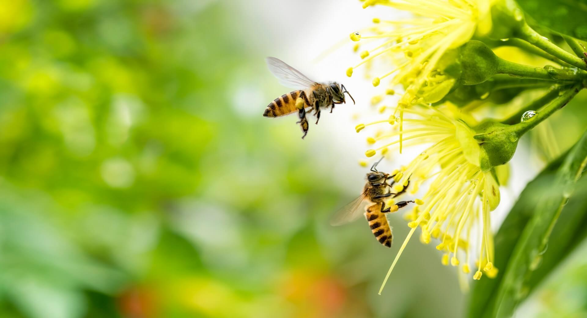 Kakšen bi bil svet brez čebel?