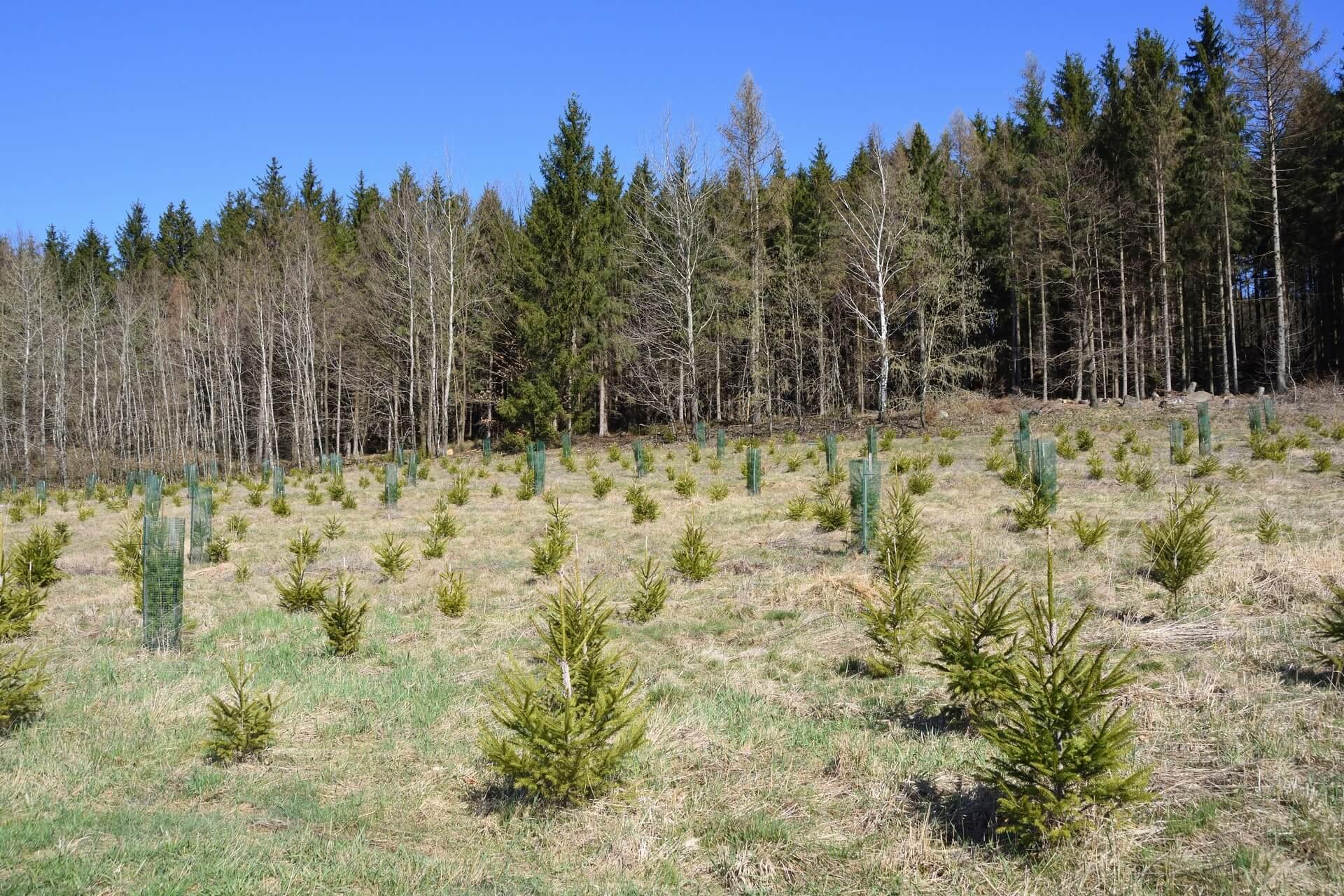V zadnjih 20 letih se je obnovilo skoraj 59 milijonov hektarjev gozdov