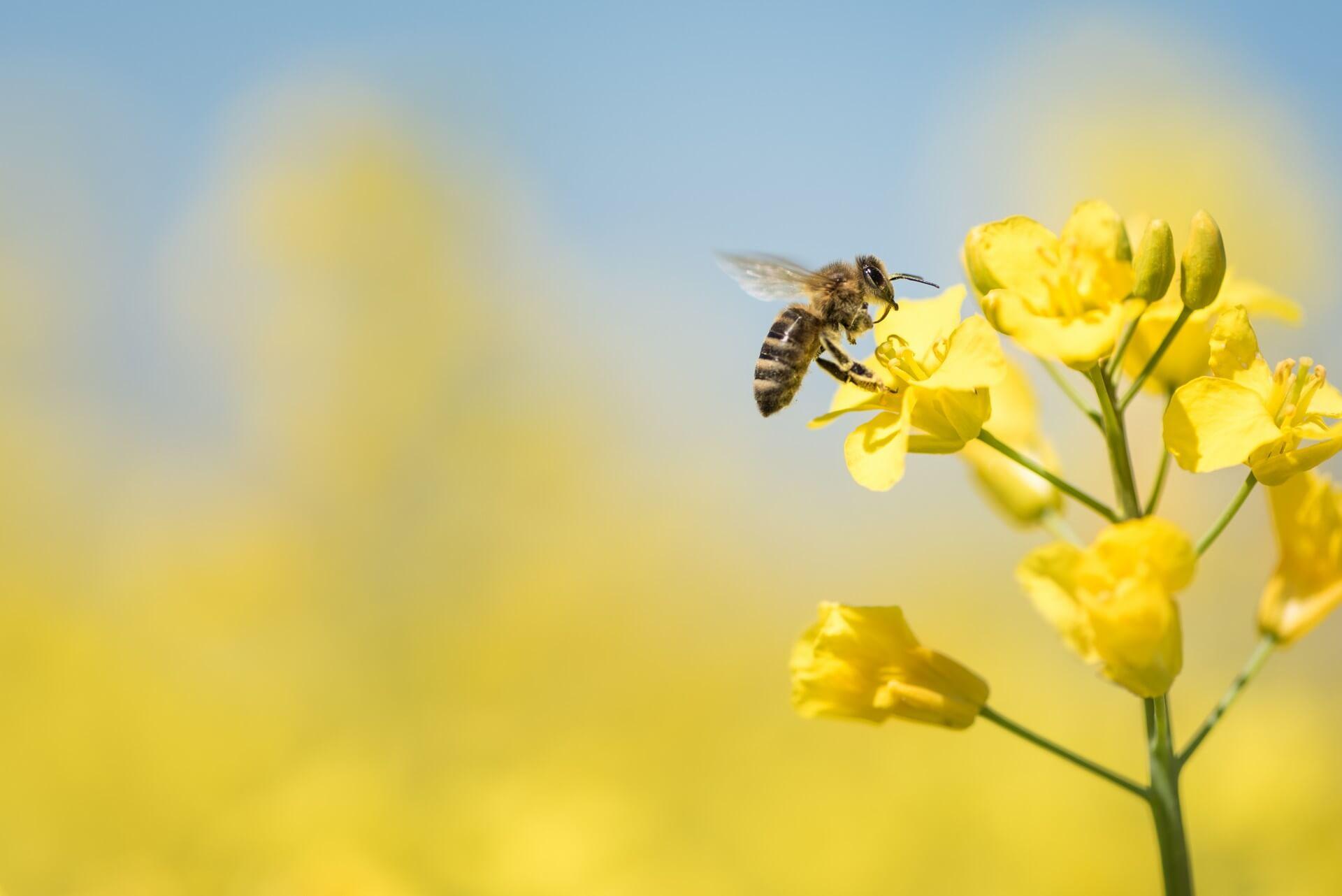 Svetovni dan čebel: Pomagajmo graditi opraševalcem prijetnejši svet