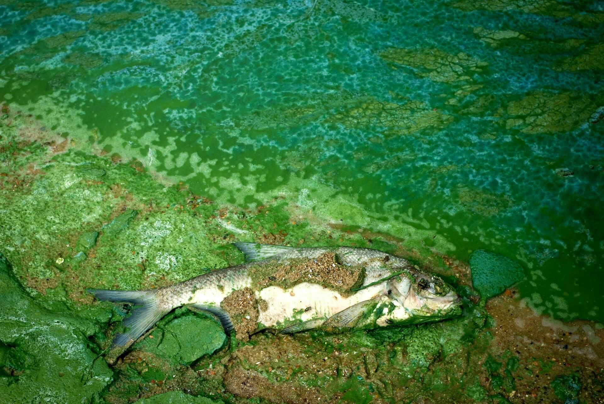 Varstvo voda: Na terenu stanje še slabše kot v uradnih poročilih