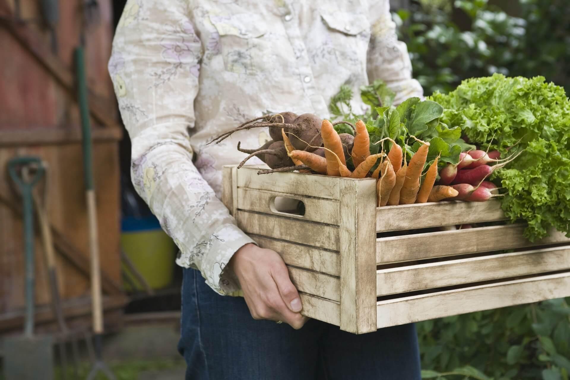 Slovenija vse bolj spodbuja ekološko pridelano hrano