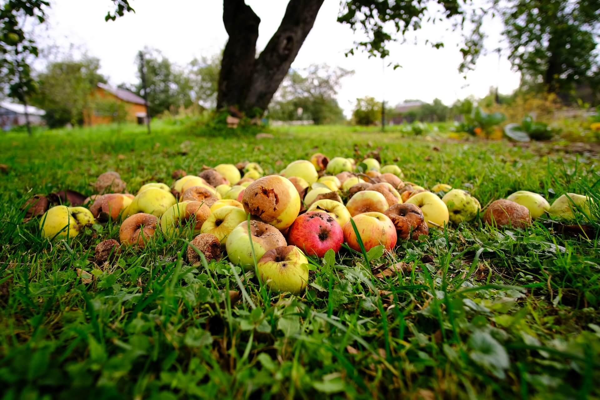 Nas mora skrbeti nizka stopnja samooskrbe s sadjem in zelenjavo?