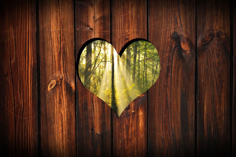 Čar lesa in Dnevi slovenskega lesarstva