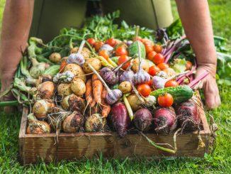 Do leta 2030 ekološko kmetovanje na 25 % kmetijskih zemljišč?