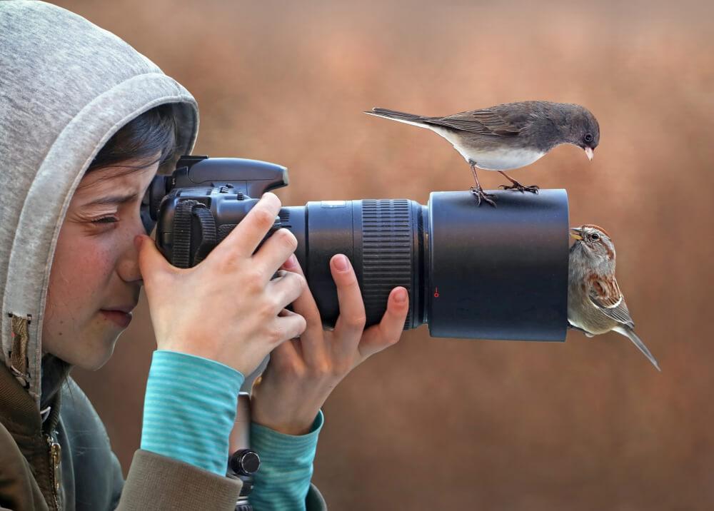 Kako fotografirati ptice, da jih pri tem ne boste motili?