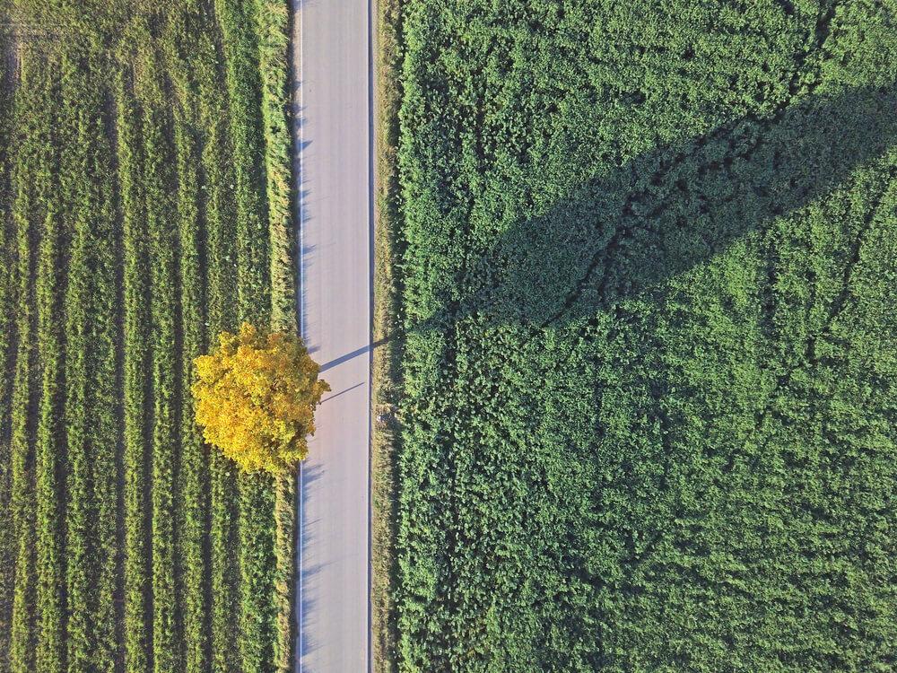 Nov zemljevid drevesnih krošenj za ohranjanje dreves